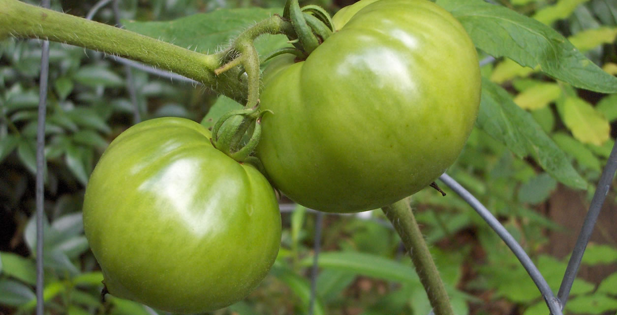 Fried green tomatoes and a great soup recipe