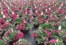 Avison Young helped Darvonda Nurseries create seven new pop-up stores to sell most of its spring plant inventory.