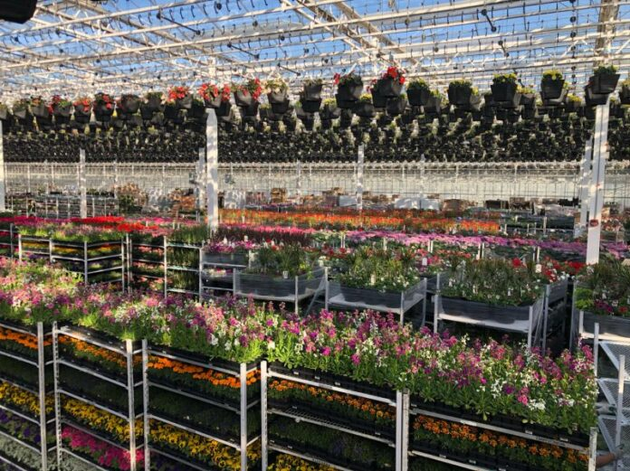 Glow Garden Centres' pop-up stores are open now.