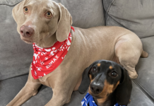 Some lucky dogs show off their Re/Max bandanas.